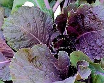 Peking Ta Ching Kou Pai Tsai Asian Green - Heirloom 25 seeds