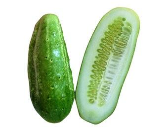 Boston Pickling Cucumber - Heirloom 20 seeds