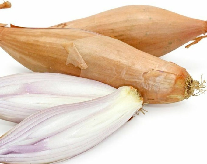 Zebrune Shallot - Heirloom 10 seeds