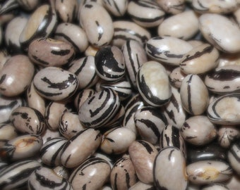 Peregion Dry Bean - RARE heirloom 20 seeds