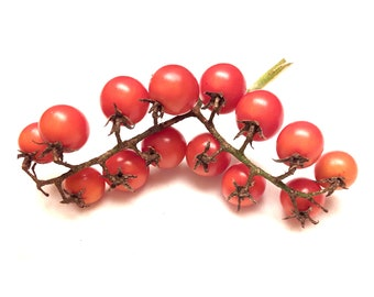 Cluster of Grapes Tomato - RARE Heirloom 10 seeds