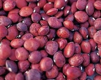Dixie Speckled Butterpea Shelling Bean - Heirloom 15 seeds
