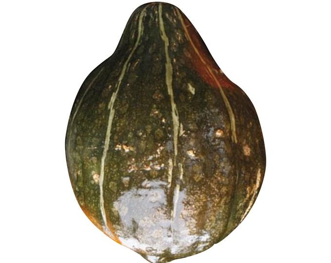 Warted Green Hubbard Squash - RARE Heirloom 7 seeds