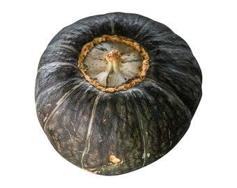 Burgess Buttercup Squash - RARE heirloom 10 seeds