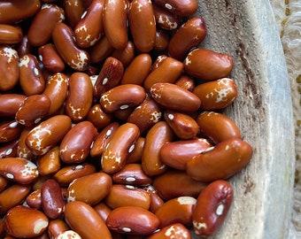 Zuni Shalako Bean - RARE heirloom 20 seeds