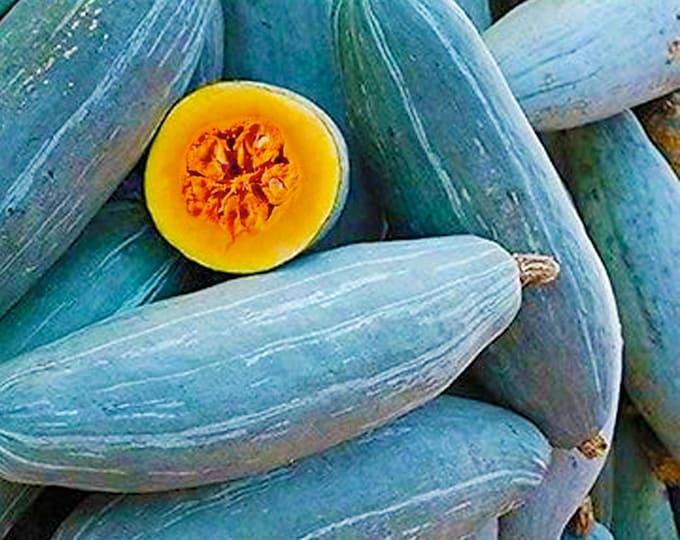 Guatemalan Blue Squash - RARE heirloom 10 seeds