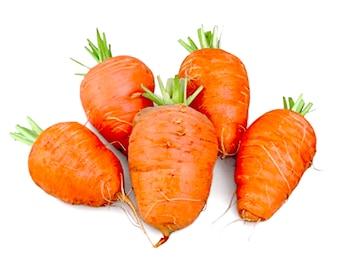 Oxheart Carrot - RARE Heirloom 25 seeds