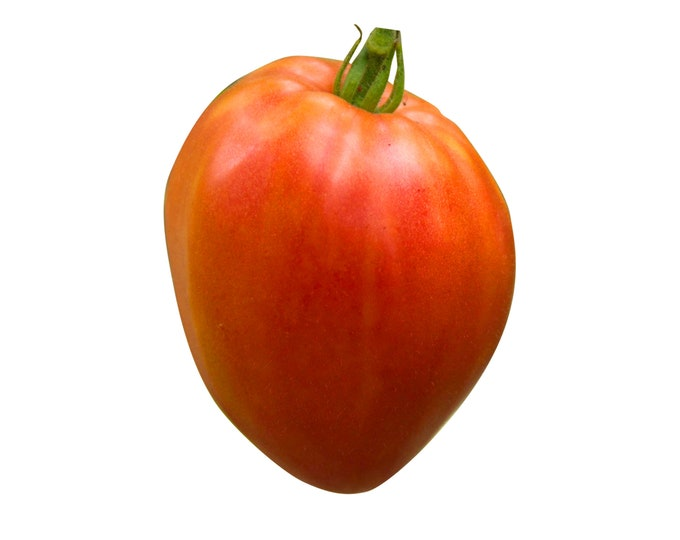 Hungarian Heart Tomato - Heirloom 20 seeds