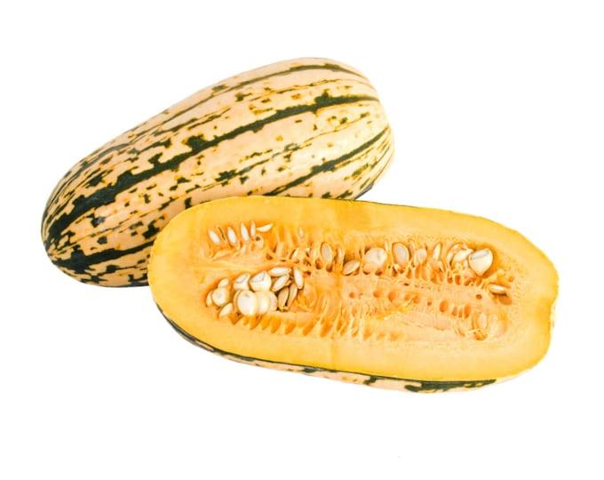Honey Boat Delicata Mountain Sweet Potato Squash - Heirloom 10 seeds