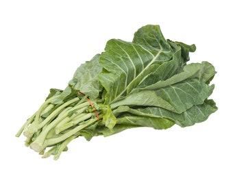 Georgia Southern Collard Greens - Heirloom 30+ seeds