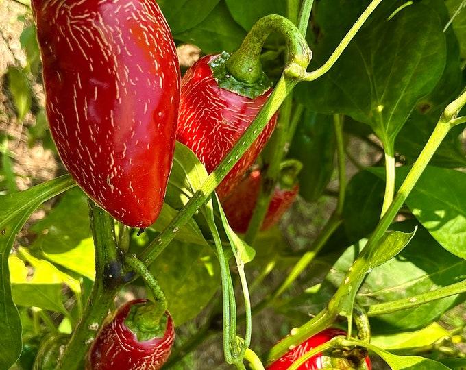 Jalapeño Chili Pepper - Heirloom 15 seeds