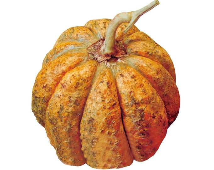 Italian Zatta Melon - RARE heirloom 8 seeds