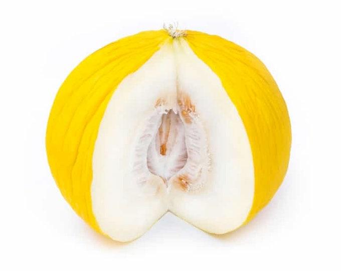 Golden Beauty Casaba Melon - heirloom 20 seeds