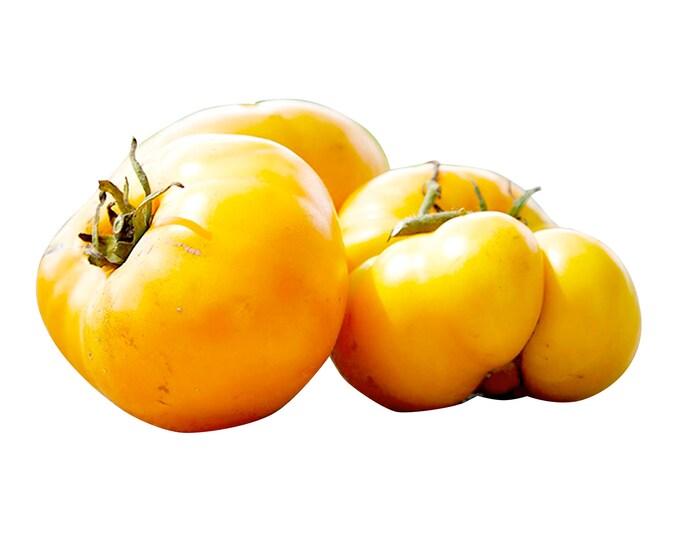 Yellow Brandywine Tomato - Heirloom 10 seeds