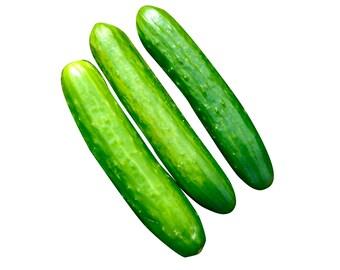 Poinsett Cucumber - Heirloom 10 seeds