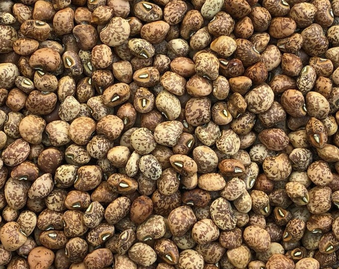 Whippoorwill Southern Pea - RARE heirloom 15 seeds