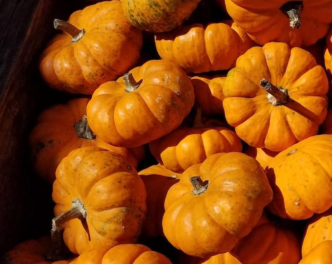 Mini Pumpkin - RARE heirloom seeds