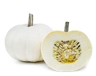 Medium White Pumpkin - RARE heirloom 5 seeds