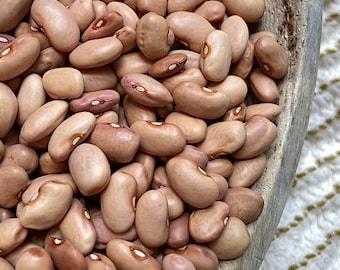 Cranberry Rosecoco Bean - RARE heirloom 20 seeds