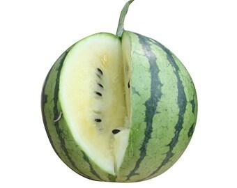 Cream of Saskatchewan Watermelon - heirloom 10 seeds