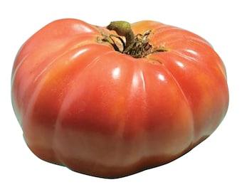 Mortgage Lifter Tomato - Heirloom 20 seeds