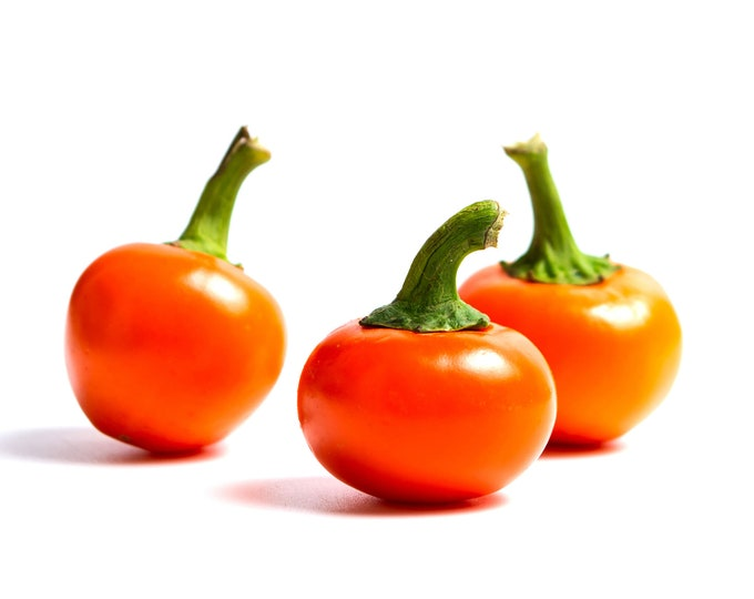 Cherry Bomb Hot Pepper - Heirloom 10 seeds