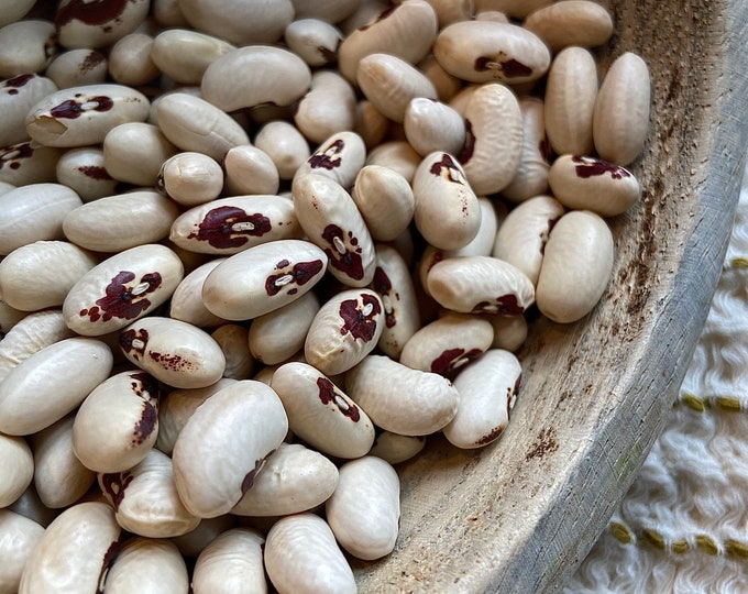 Holy Spirit in Red Eye Bean - RARE heirloom 20 seeds