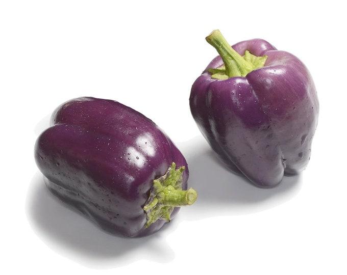 Purple Beauty Pepper - Heirloom 15 seeds