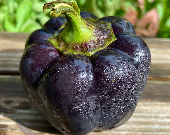 Zulu Black Sweet Pepper - Heirloom 15 seeds
