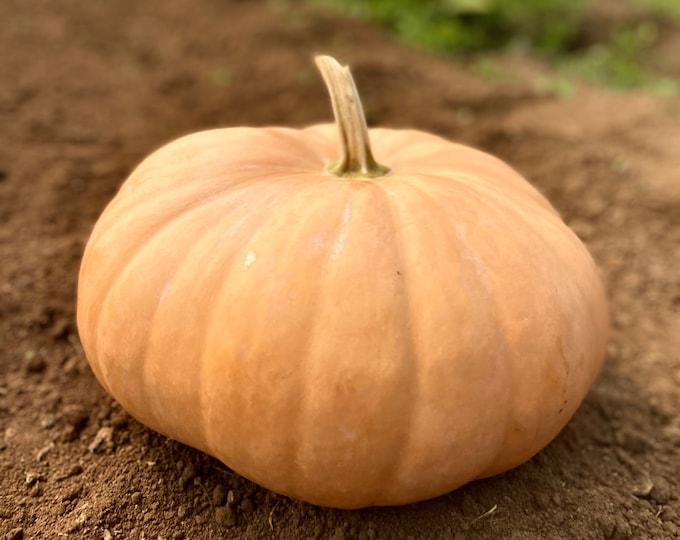 Long Island Cheese Pumpkin - RARE heirloom 8 seeds