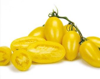 Cream Sausage Tomato - RARE heirloom 10 seeds