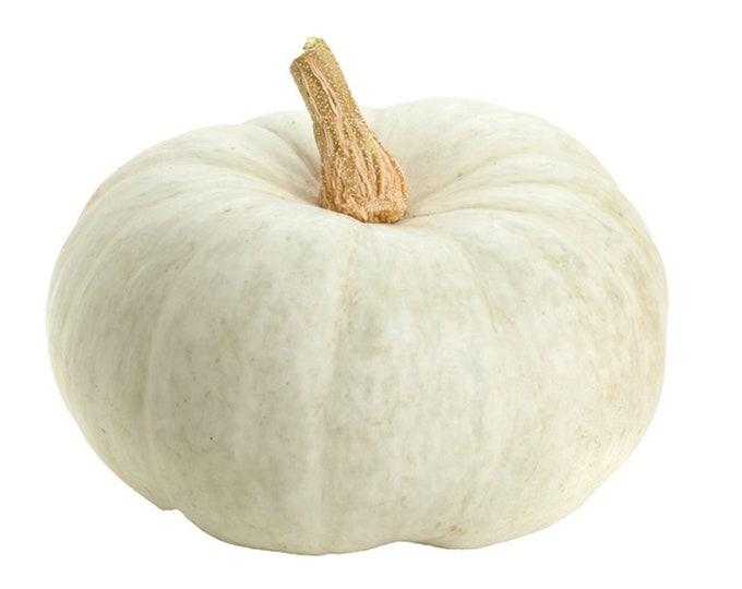 White Mini Pumpkin - heirloom 10 seeds
