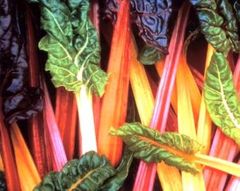Five Color Silverbeet Swiss Chard - Heirloom 10 seeds