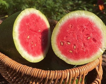 Bradford Watermelon - RARE heirloom 12 seeds