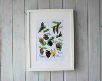 Download Print Poster Bild Nadelbäume Zapfen Wald Sammeln Übersicht