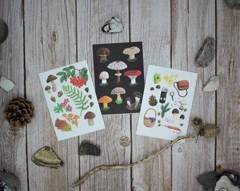 Postcard Set 3 Postcards Mushrooms Autumn Forest Vintage fsc-certified