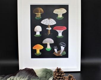 Download Print Poster Bild Pilze A5 A4 A3 sammeln Vintage Natur Speisepilze Herbst Wald