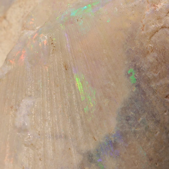 Opal Replacing Bivalve fossil / 22.90 grams / Coober Pedy, Australia