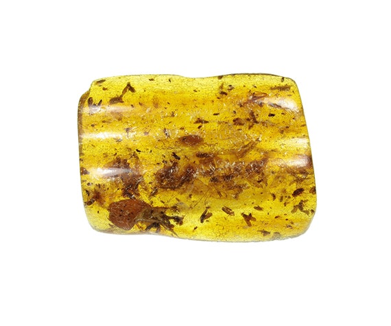 Copal / Young Amber with insect inclusions / Locality - Colombia