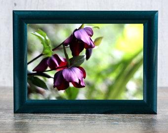 Burgundy Flower Photographic Print