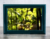 Bamboo Leaves Photographic Print