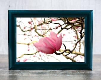 Magnolia Blossom Photographic Print
