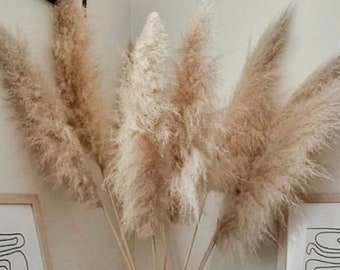 3 Extra Large Dried Pampas Grass 4ft | Dried Flowers For Interior Decoration | Wedding Floral Decorations | Jumbo Pampas Grass