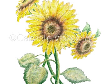 Original Coloured Pencil Illustration - Three Sunflowers - Wall Art - Wall Decor - Gift - By UK artist - Supplied with white mount.