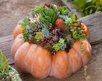 Fairytale Pumpkin Succulent Class, In-person Tutorial, Carlsbad, CA