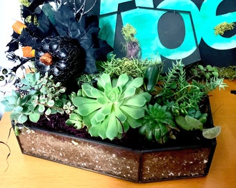 Gothic Glass Coffin Planter with Succulents Scary, Goth Decor for Halloween