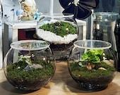 DIY Moss Terrarium (Small)