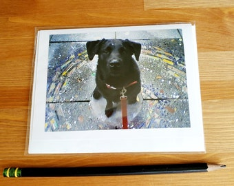 1 Black Labrador ~ Pet Photo Greeting Card ~ 4 x 5.5 ~ Dog Love ~ Blank Card With Envelope ~ Fur Kid ~ Best Friends ~ City Dog