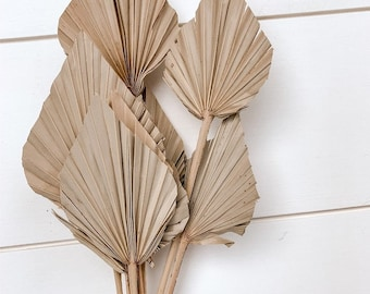 Natural Palm Leaf, Mini Dried Palm Spear Natural or White, Dried Palm Leaves Bulk, Dried Spear Palm, Dry Palm Leaves, DIY Boho Decor