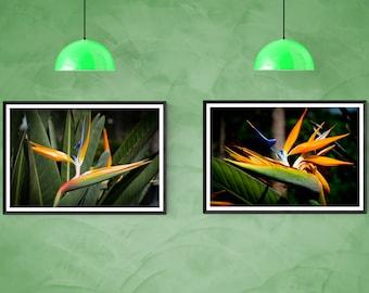Tropical Birds of Paradise